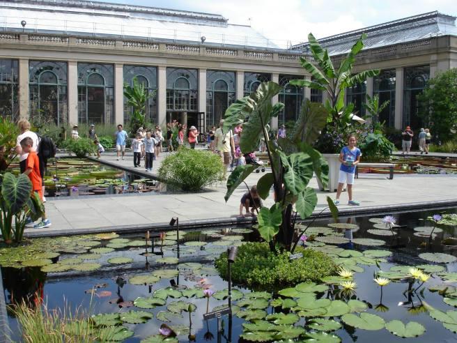 water lilies longwood