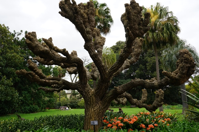 royal botanical gardens mebourne