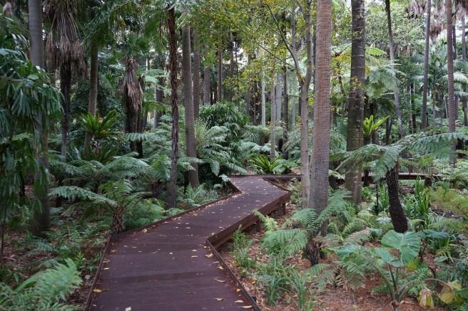 rainforest in royal botanical gardens