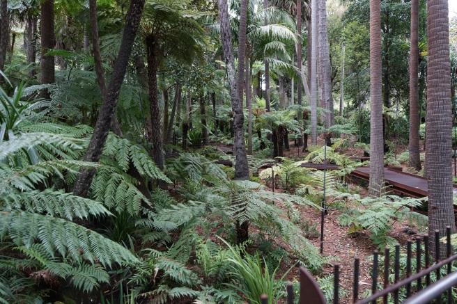 rainforest walk through pathways